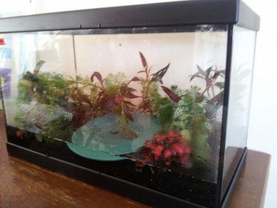 installation aquarium (5)