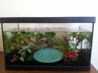 installation aquarium (6)