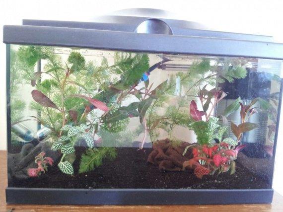 installation aquarium (7)