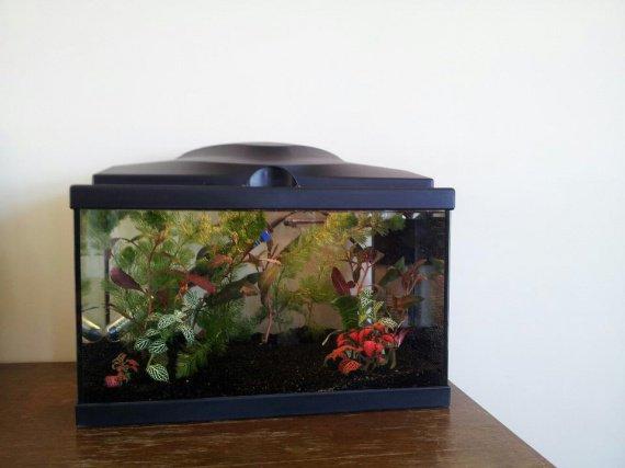 installation aquarium (8)