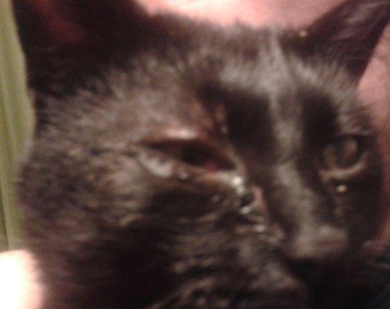 Grosses blessures l 39 oeil de mon chat quels premiers - Mon chat me colle plus que d habitude ...