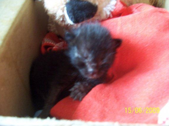 bebe cat 002