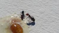 repas fourmis  peymeinade 2016