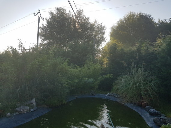 bassin sapin 23-07-18