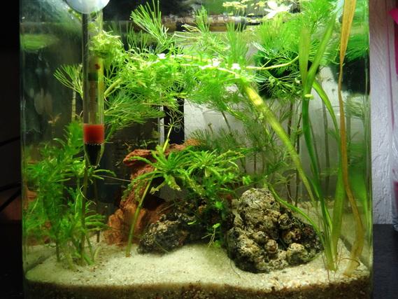 aquarium crevettes aquariums et vivariums forum animaux. Black Bedroom Furniture Sets. Home Design Ideas