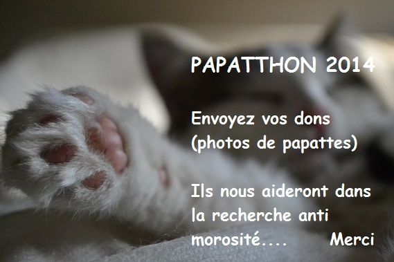 papathon 2014