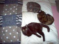 gagou chipie minouche squattent mon lit !