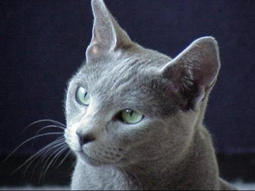 bleurusse (Small)