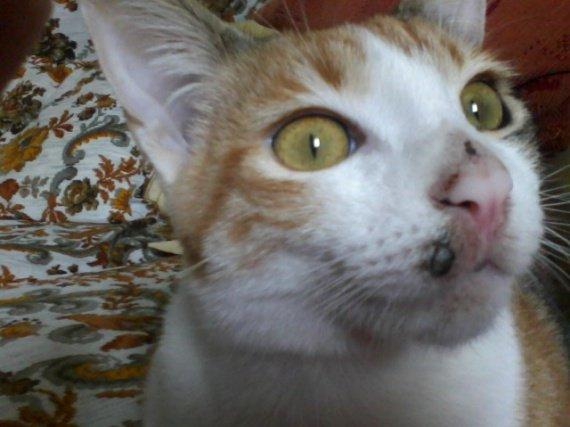 Accidental creampie dans la chatte de la jeune blonde - 2 9