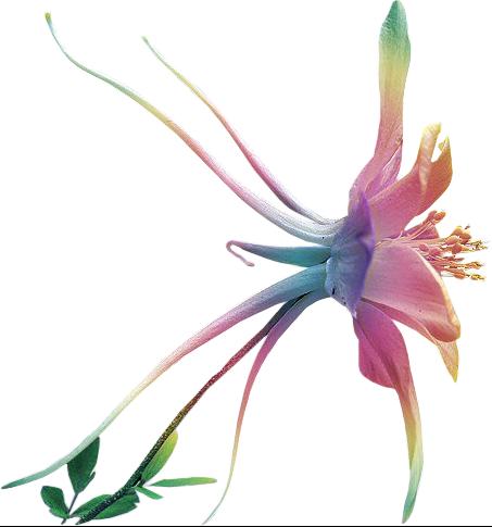 florafleur-173aa79
