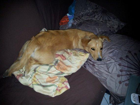 GHINZO il arrive à couvrir 3 oreillers en même temps :O