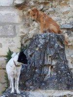 Les Statues (1)