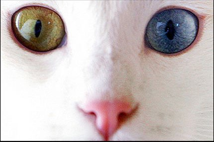 chat yeux.jpg2.