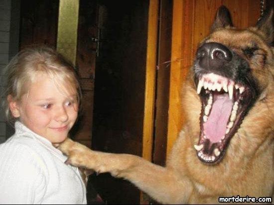 chien-mort-de-rire