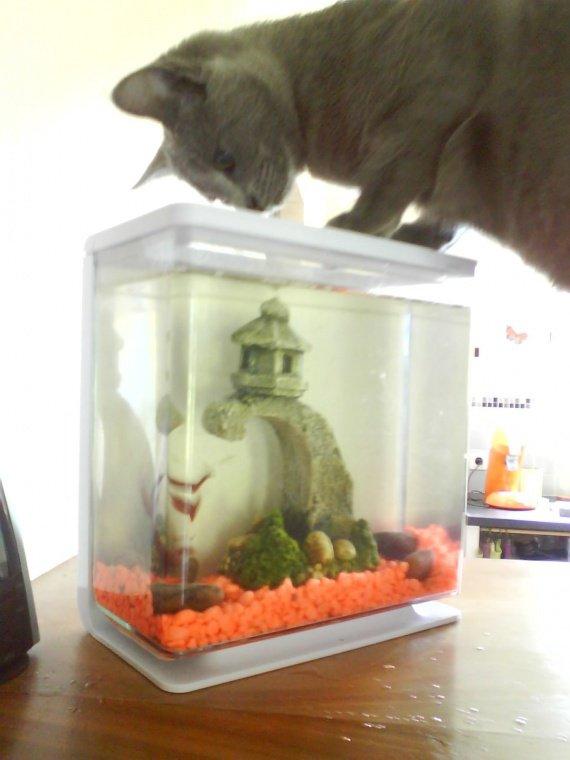 frimousse aquarium