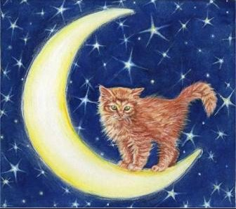 chat-lune-roux1