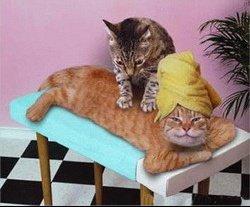 les-chats