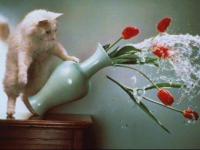 chat_renverser_fleurs