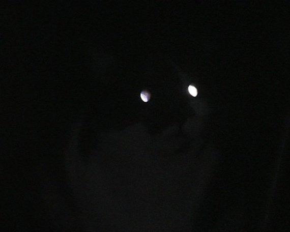 sens-chat-nuit-gd