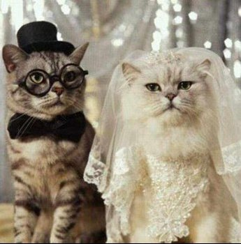 229172_676017402_cover-mariage-chat_H134258_L