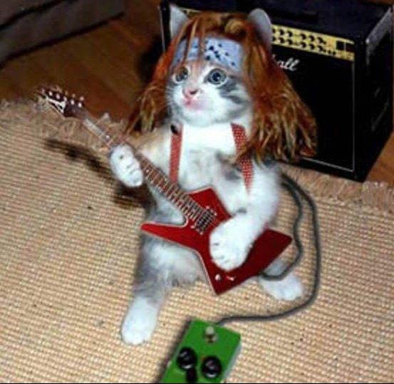 Le-petit-chat-chanteur