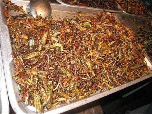 cuisine insecte