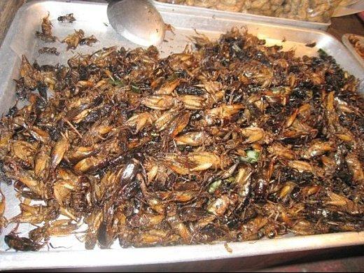 cuisine insectes 2