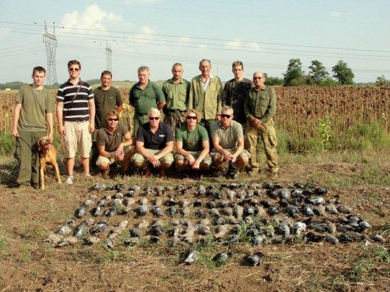 pigeons 2 (2)