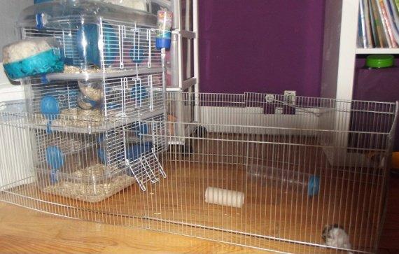 hamster-zoe-enclos-img