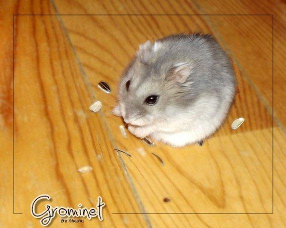 hamster-grominet-img