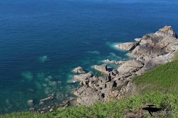 Côte-rocheuse-falaises-près-du-Fort-Lalatte-vu-depuis-chemin-du-douanier