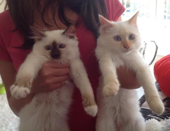 Loki & Akané