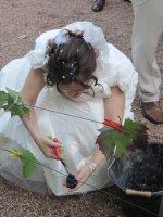 ... et la mariée vendange !