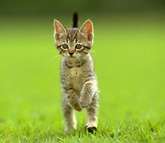 Rencontre et chat algerie