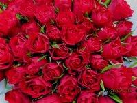 roses 1retouchée