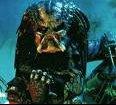 predator3