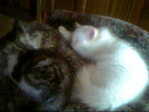 les 2 chatounettes1 aout 07