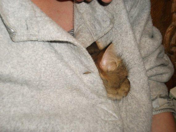 chatons truffe aki 003