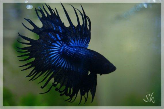 aquariums-dsc08112-img