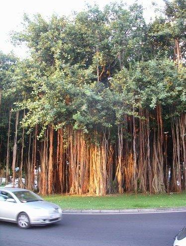 arbre-rond-point