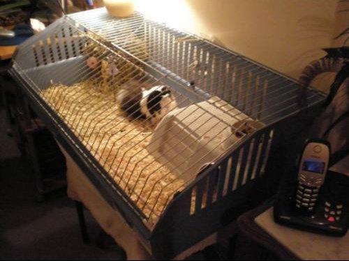 La cage 2