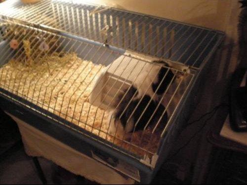 La cage 1