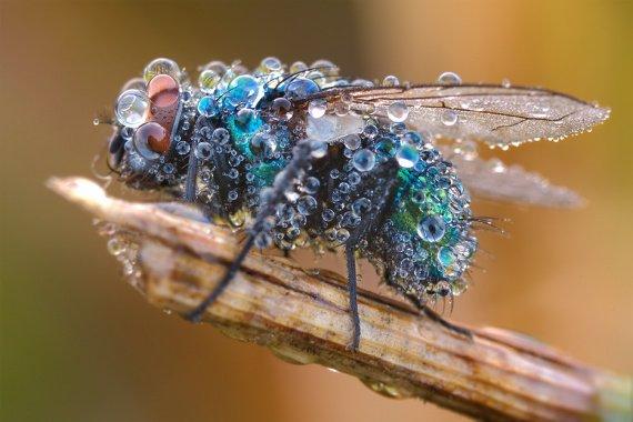 La bulle d'Austraelle [V2.0] Nature-vie-beaute-beauty-struller-img