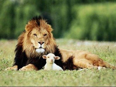 lion-and-the-agneau.jpg1.