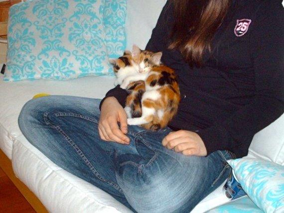 concours-entente-chats-petites-soeurs-calin-img