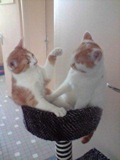 concours-entente-chats-blanche-guimauve-img