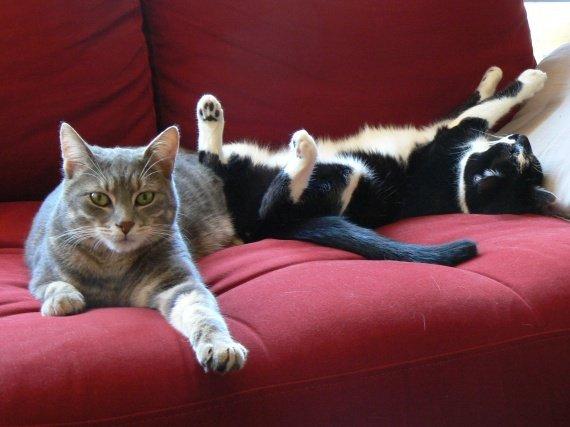 concours-entente-chats-vraiment-distinguee-soeur-img