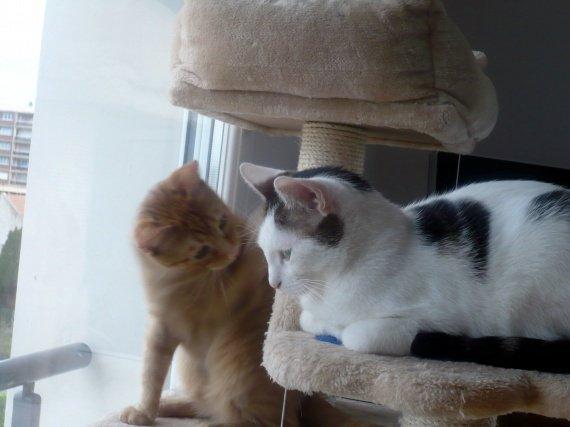concours-entente-chats-vas-bien-copain-img