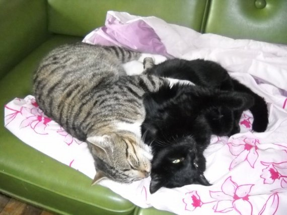 concours-entente-chats-chouchoutte-revenu-squelettiqyue-img