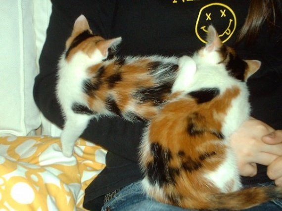 concours-entente-chats-petites-soeurs-sieste-img